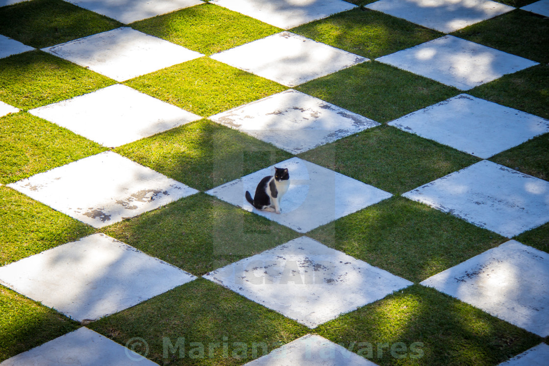 """Cat at Japanese Garden, Buenos Aires, Argentina"" stock image"