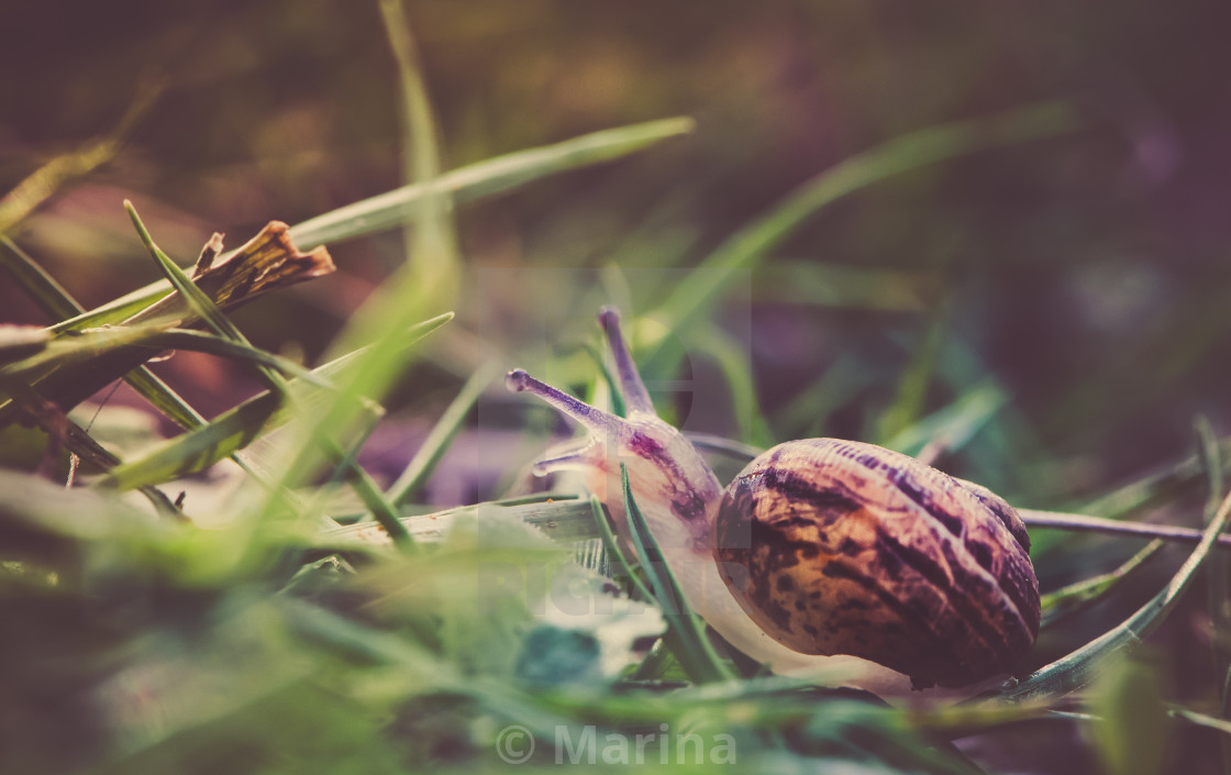 """Snail trials"" stock image"