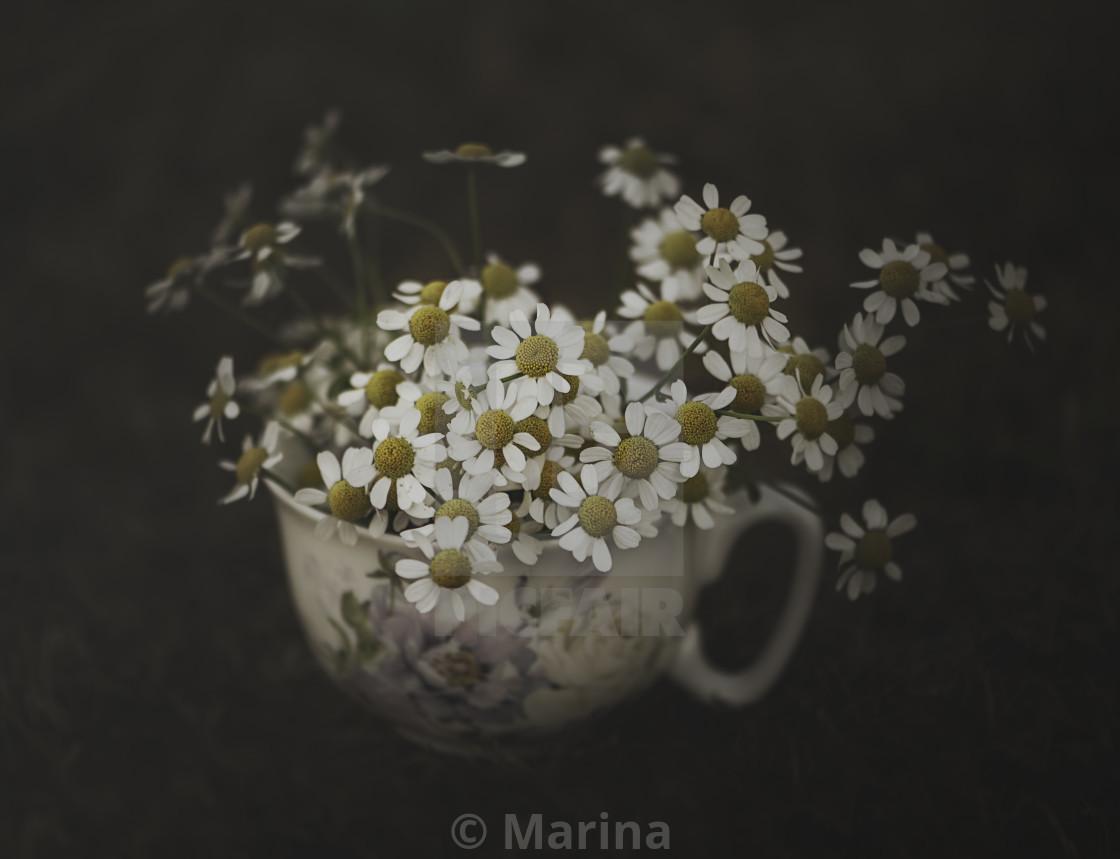 """Camomile teacup"" stock image"