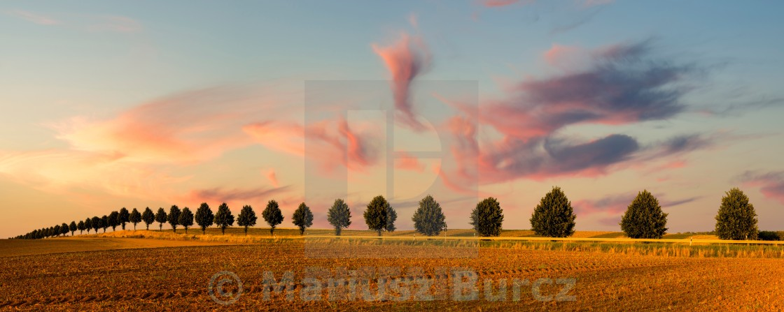 """field after the harvest"" stock image"