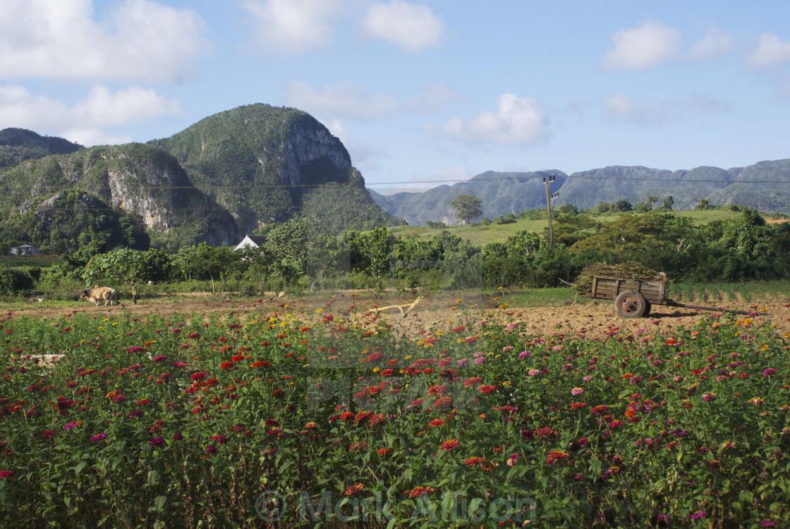 """Cuban countryside"" stock image"