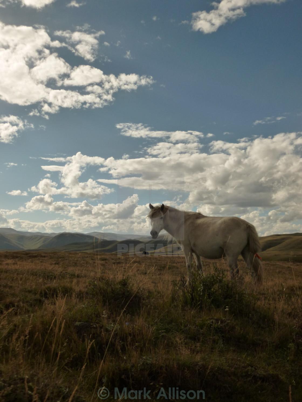 """""""Horse in TIbet"""" stock image"""