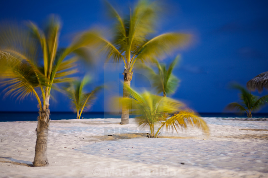 """Full Moon Palm Trees"" stock image"