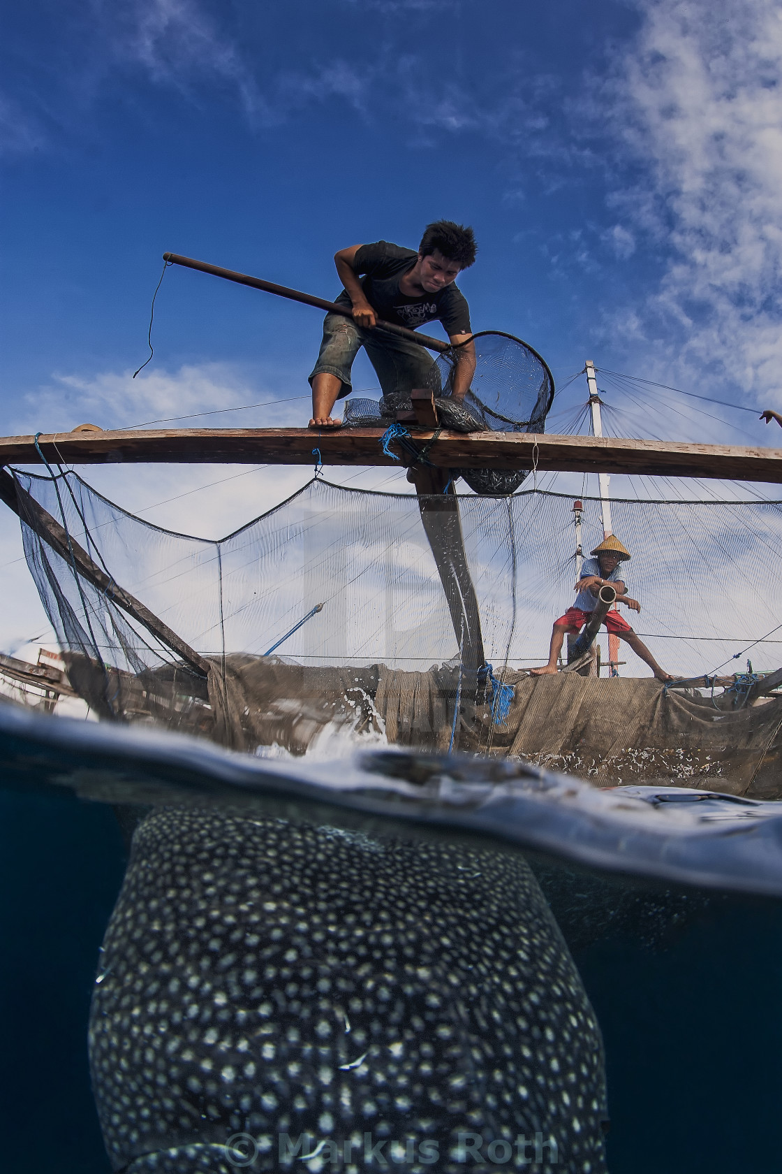 """Local fisherman feeding the whale shark from the fisherman plattform called Bagan."" stock image"