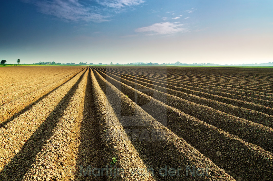 """Lines in the field"" stock image"