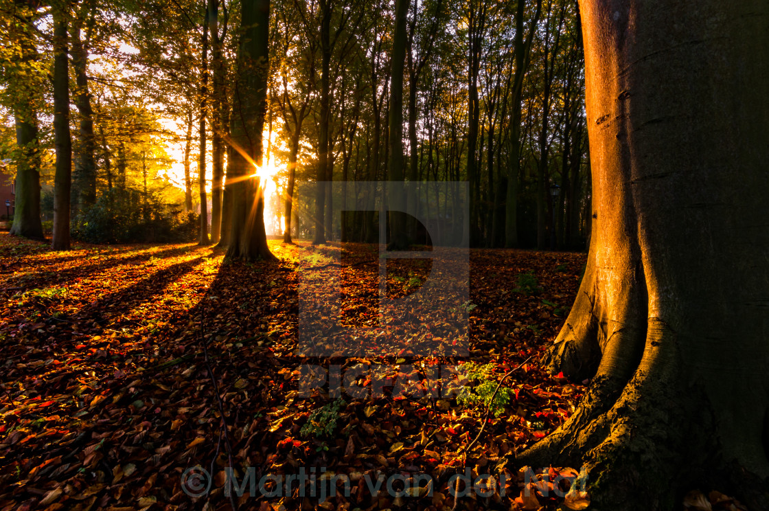 """Fall Forest"" stock image"