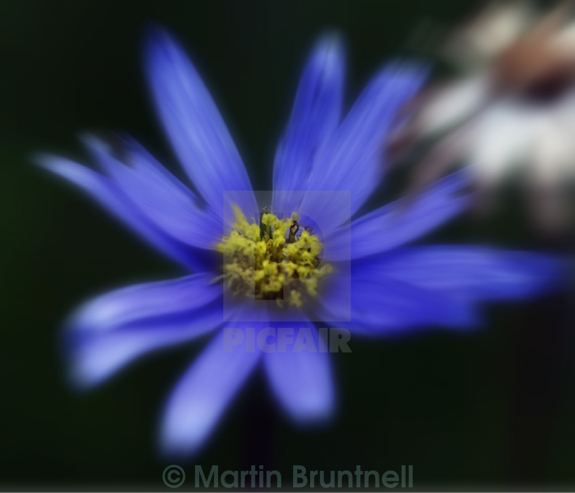 """The blue flower"" stock image"