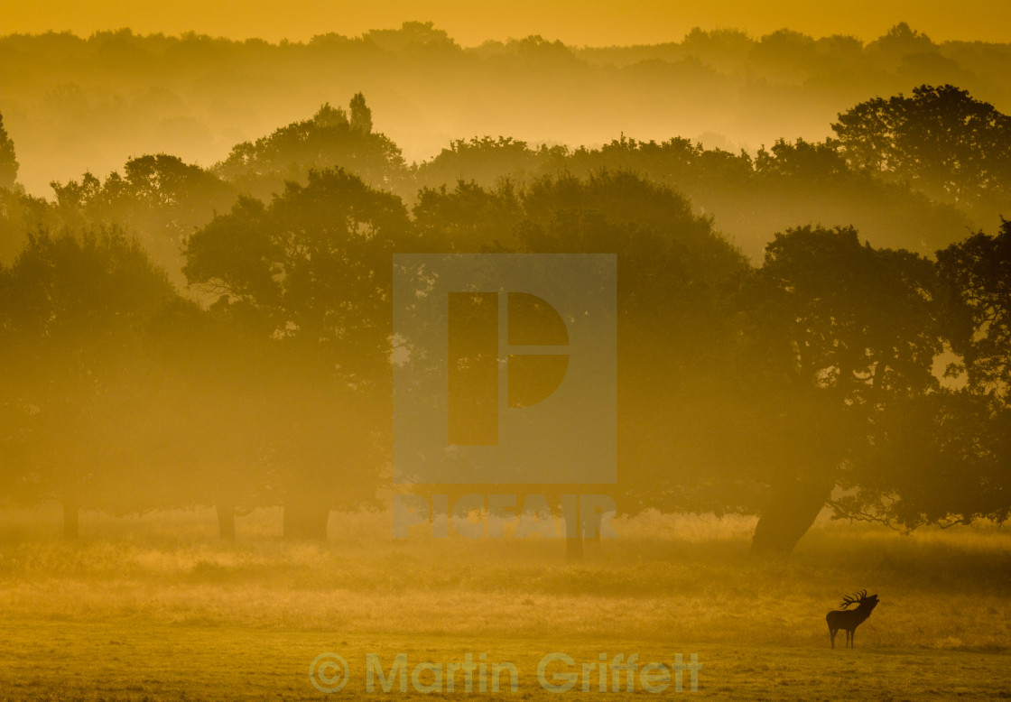 """Misty Sunrise"" stock image"