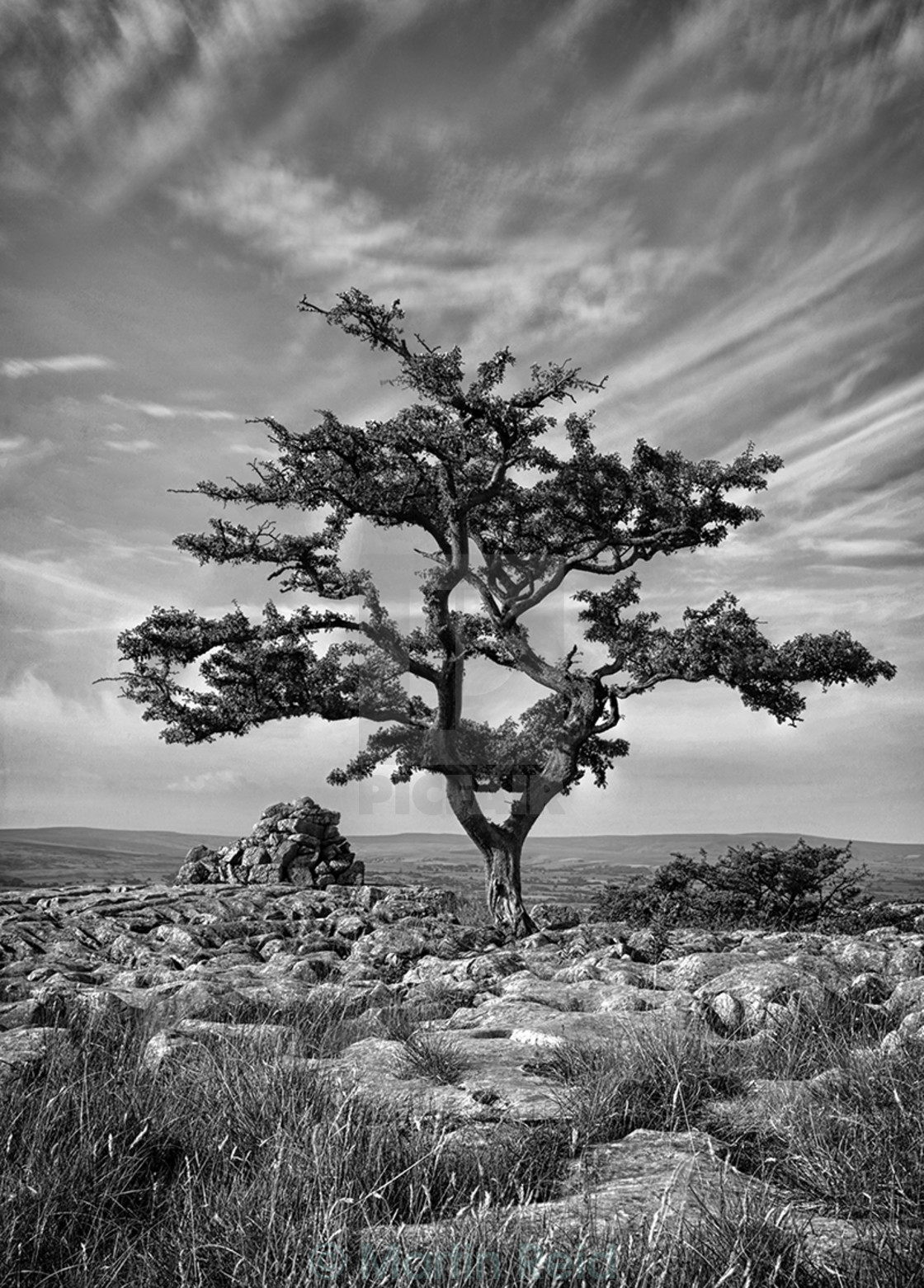 """""""Ingleton Tree 1"""" stock image"""