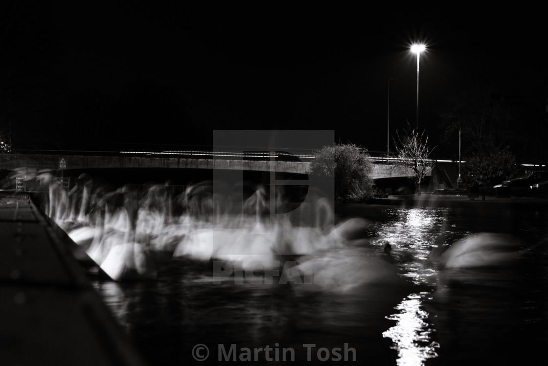 """Swan lake- swans with motion blur, mono"" stock image"