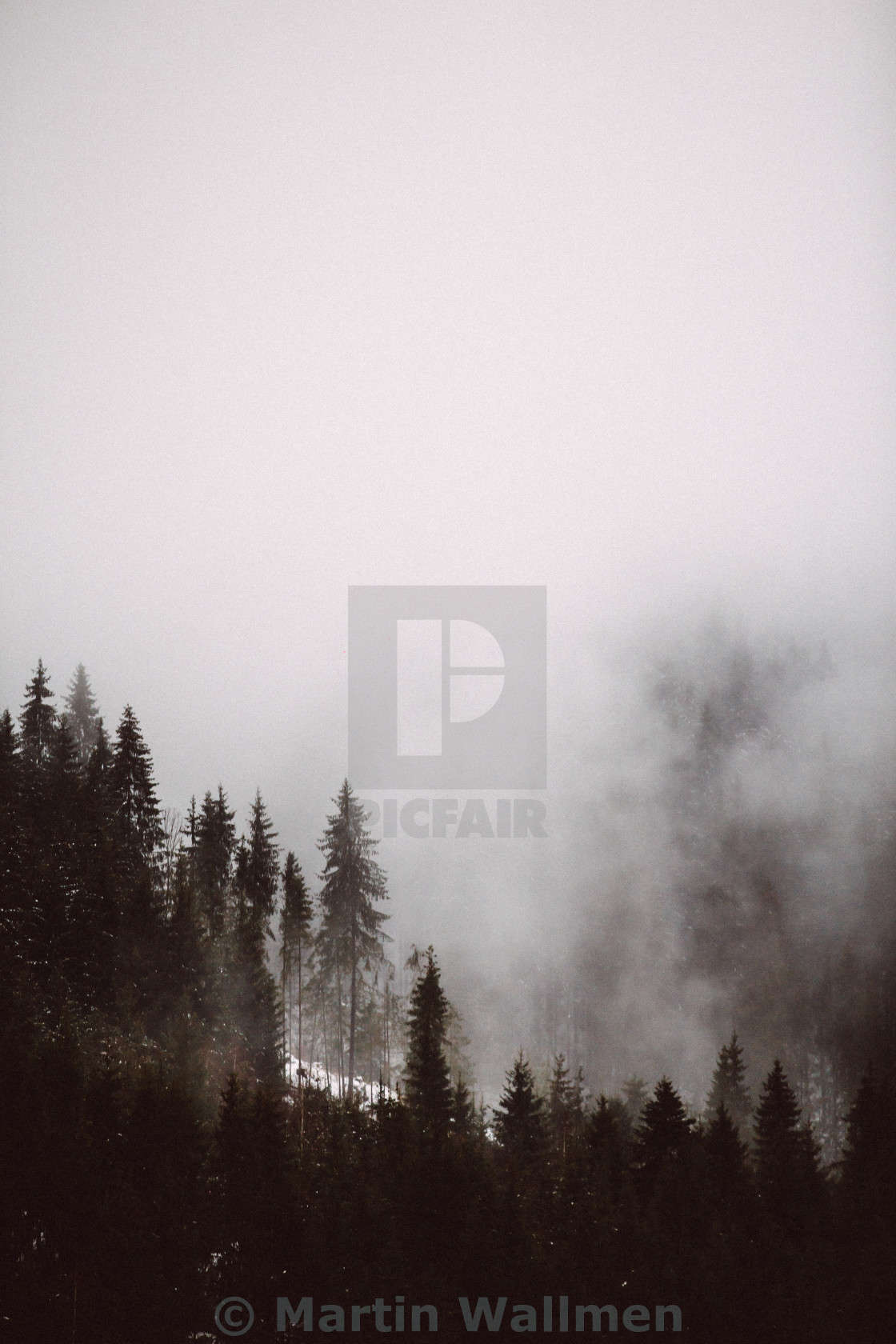 """Forest covered in fog"" stock image"