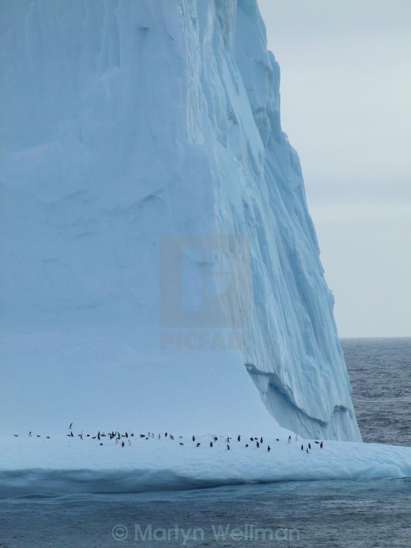 """Iceberg with penguins"" stock image"