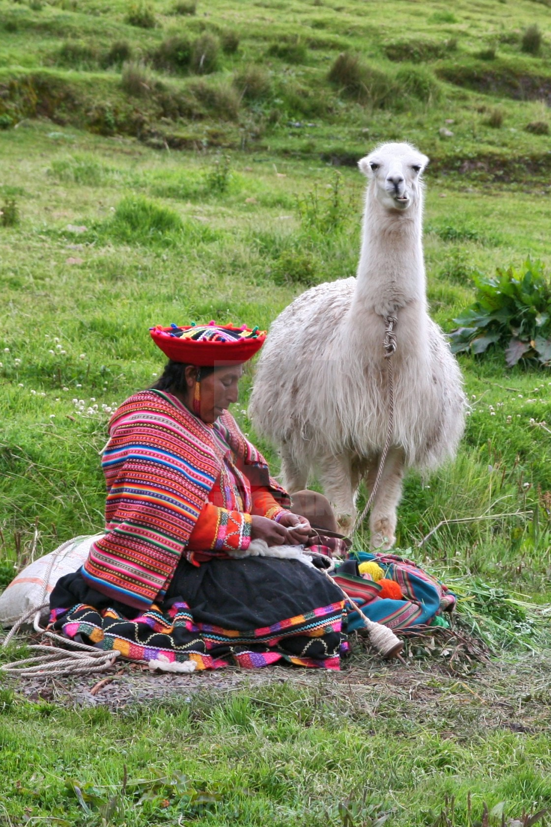 """Llama with Indian woman"" stock image"