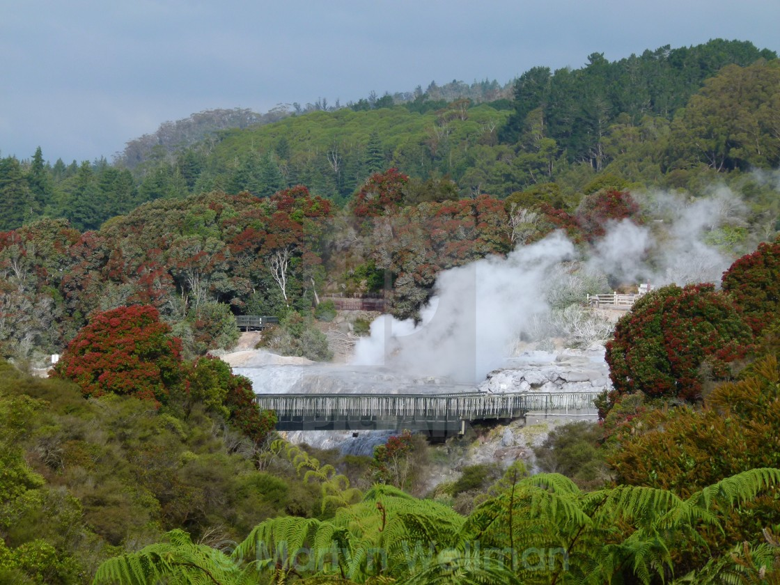 """""""Steaming hot springs, NZ"""" stock image"""