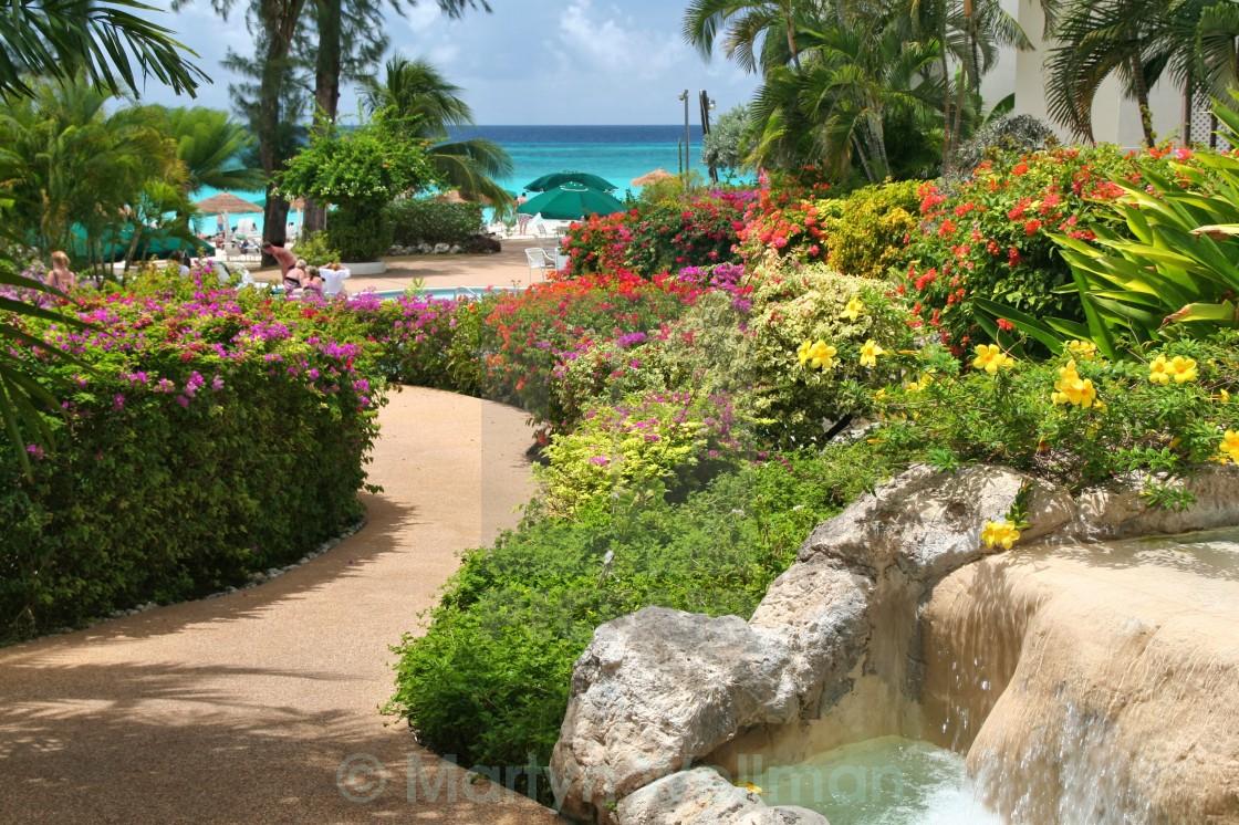 """""""Barbados flowers"""" stock image"""