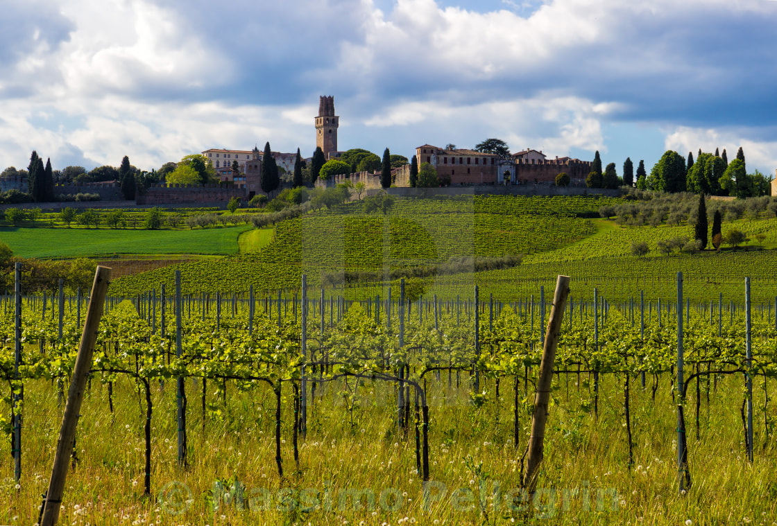 """""""Hilly landscape with vines and an old castle in Italy"""" stock image"""