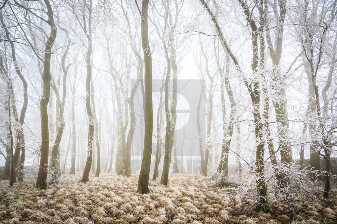 """Frost Covered Foggy Wood near Crowdecote, Peak District National Park"" stock image"