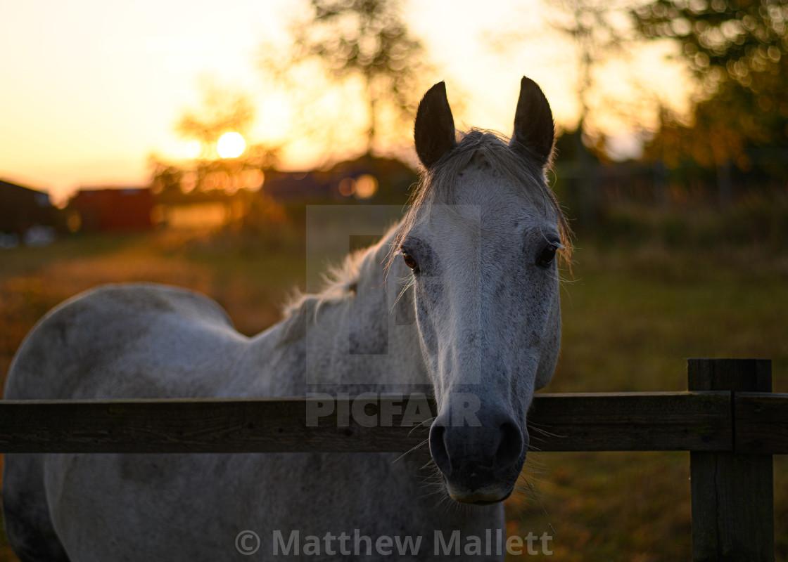 """Good Morning Pony"" stock image"