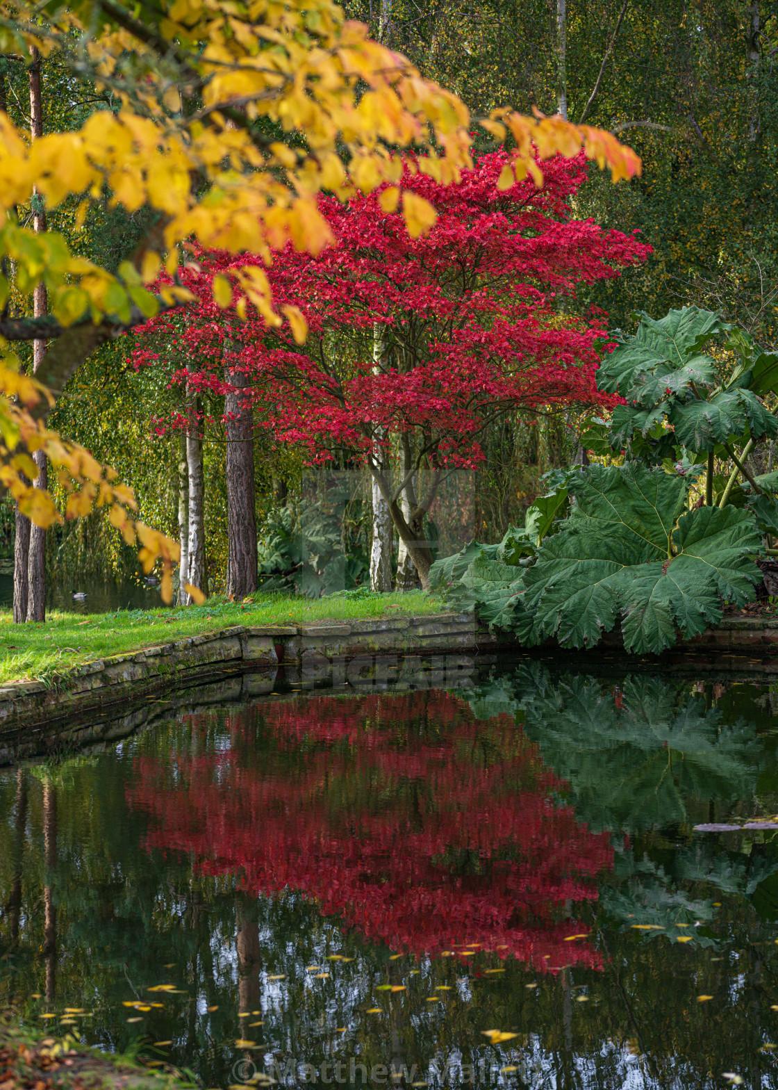 """Autumn Leaf Colour"" stock image"