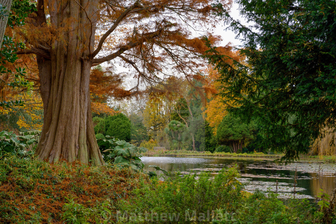 """Under The Autumn Tree"" stock image"