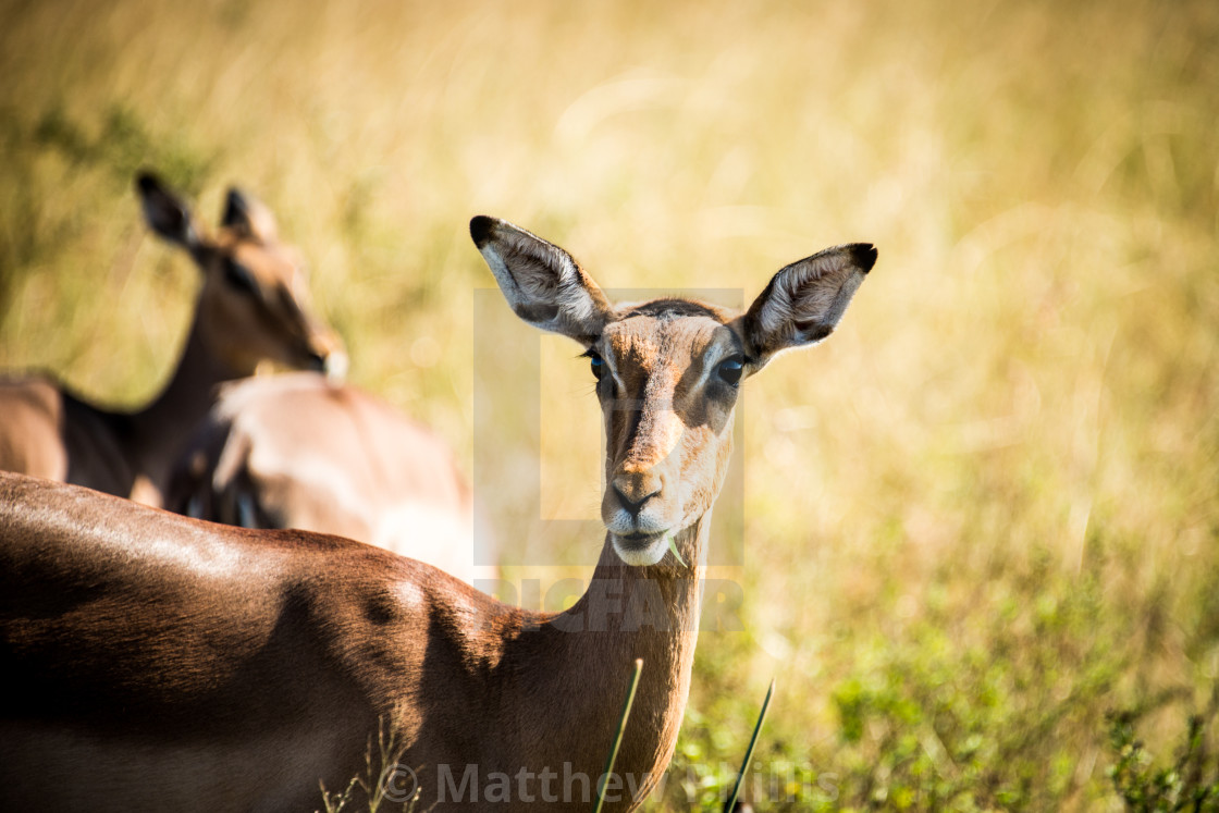 """Hello Deer"" stock image"