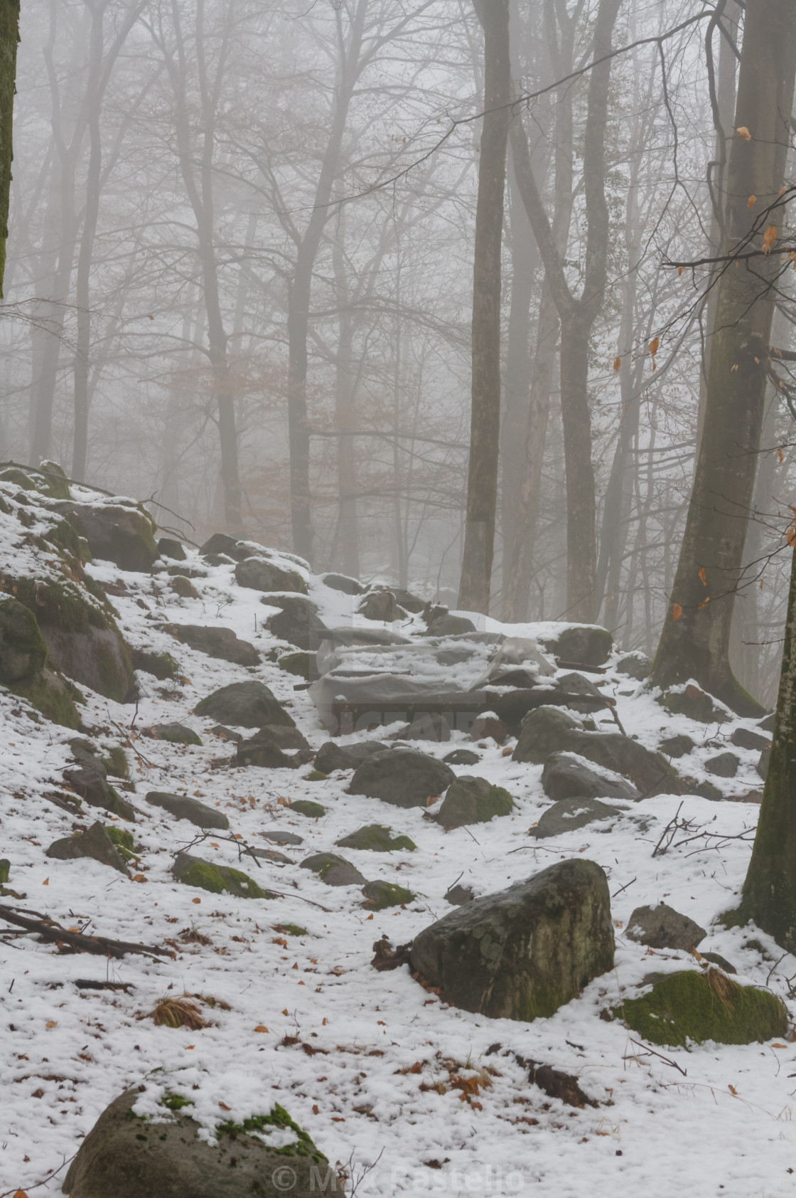 """""""Winter beech forest"""" stock image"""