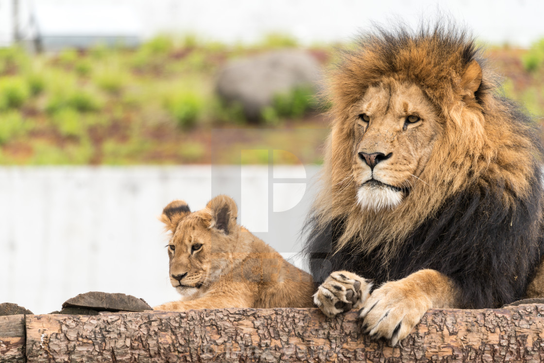 """Father And Son"" stock image"