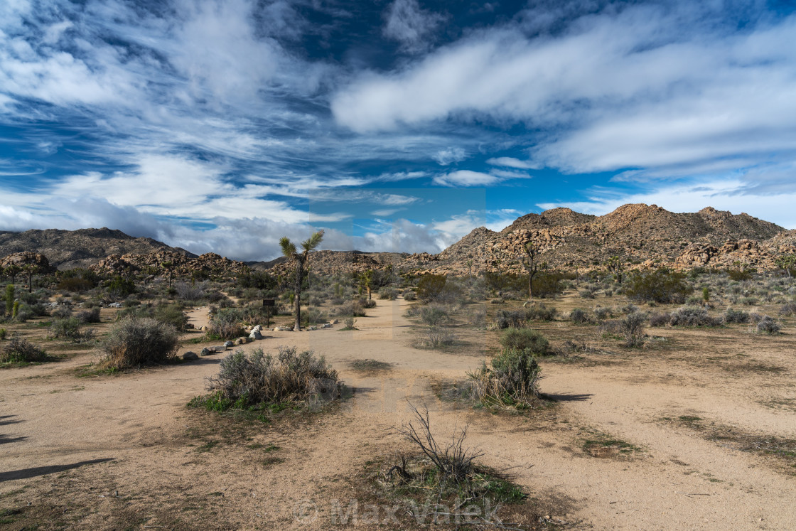"""Joshua Tree National Park"" stock image"