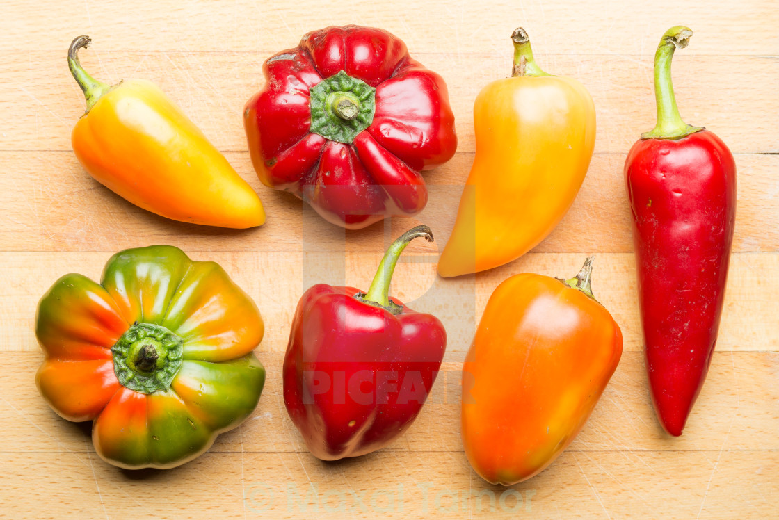 """Peppers From my Garden"" stock image"