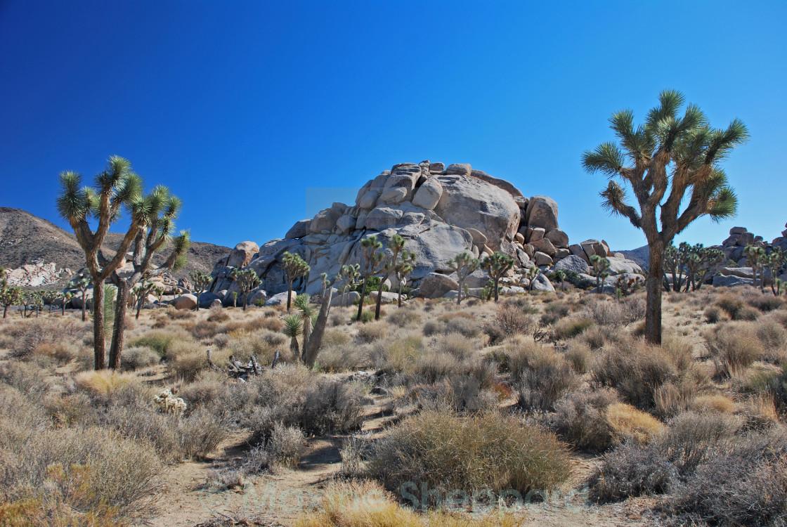 """Cap Rock, Joshua Tree National Park"" stock image"
