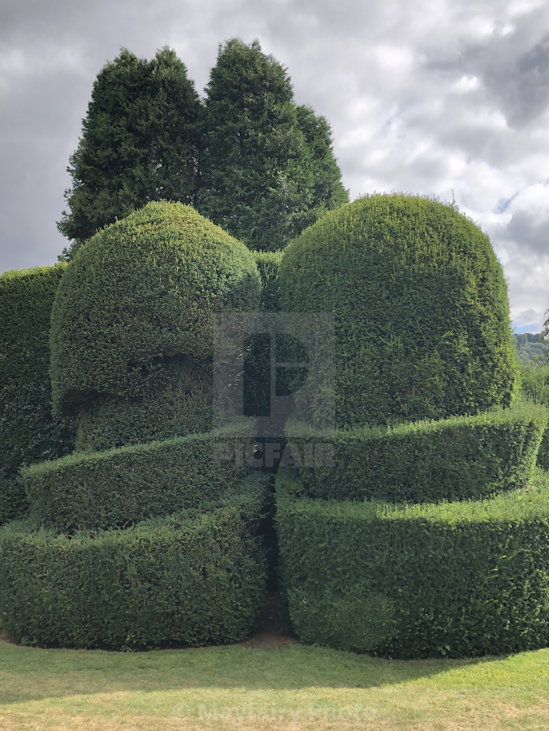 Artistically Shaped Hedges In Highclere Castle Gardens Hampshire