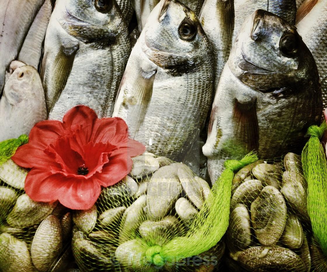 """Fish display"" stock image"