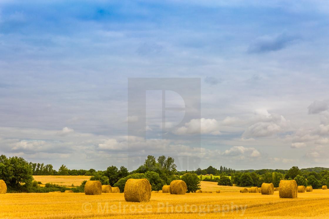 """""""Golden Harvest in Lege France"""" stock image"""