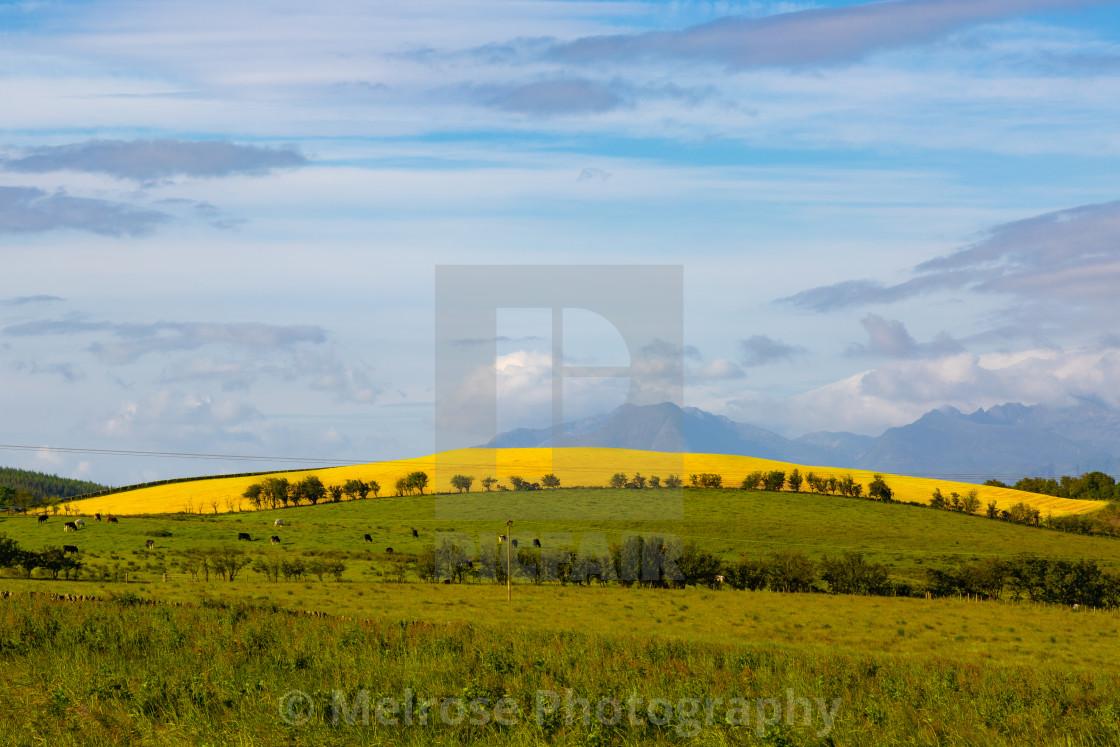 """Yellow Field"" stock image"