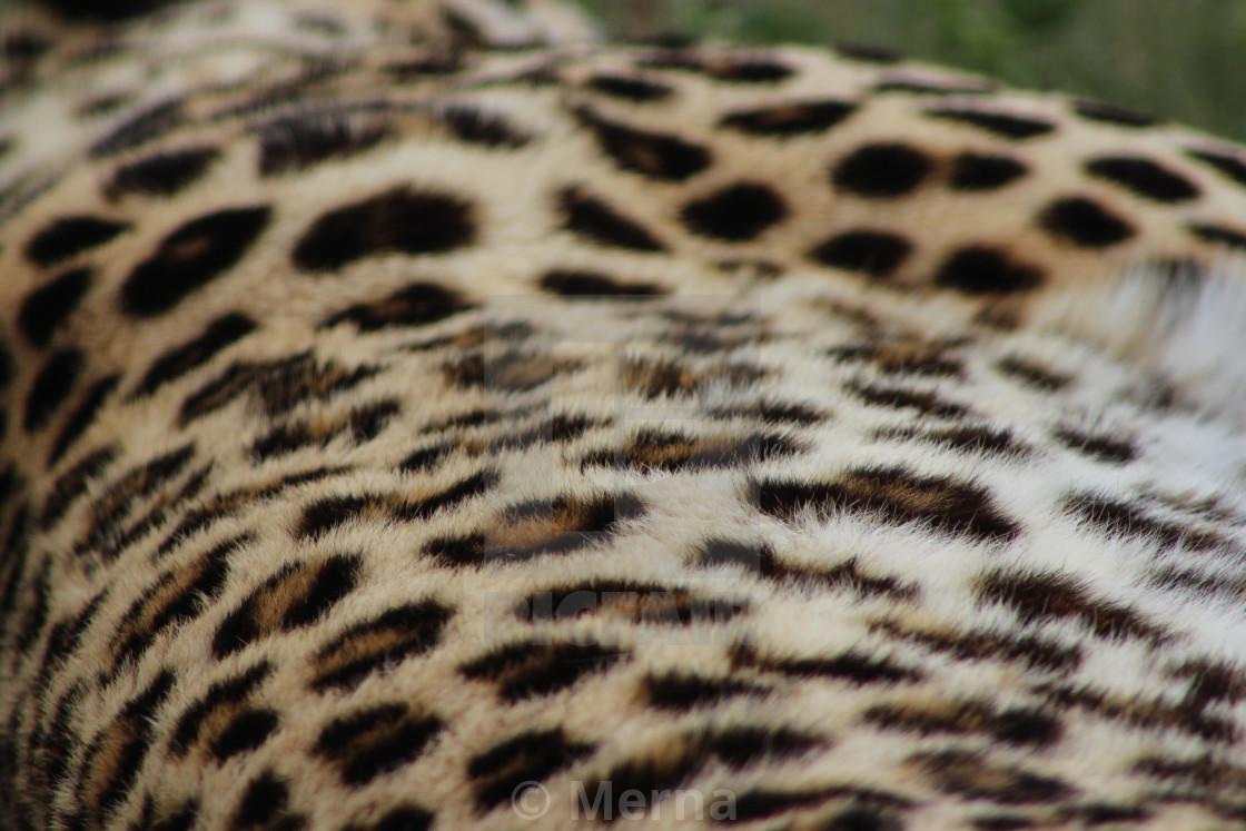 """Leopard Pattern"" stock image"