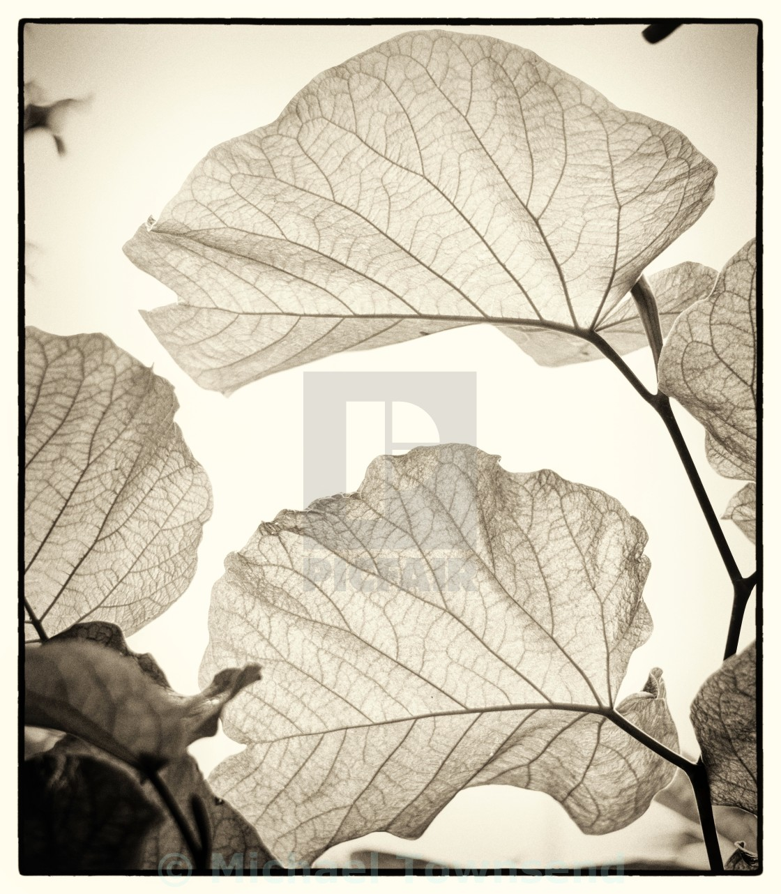 """Leaves"" stock image"
