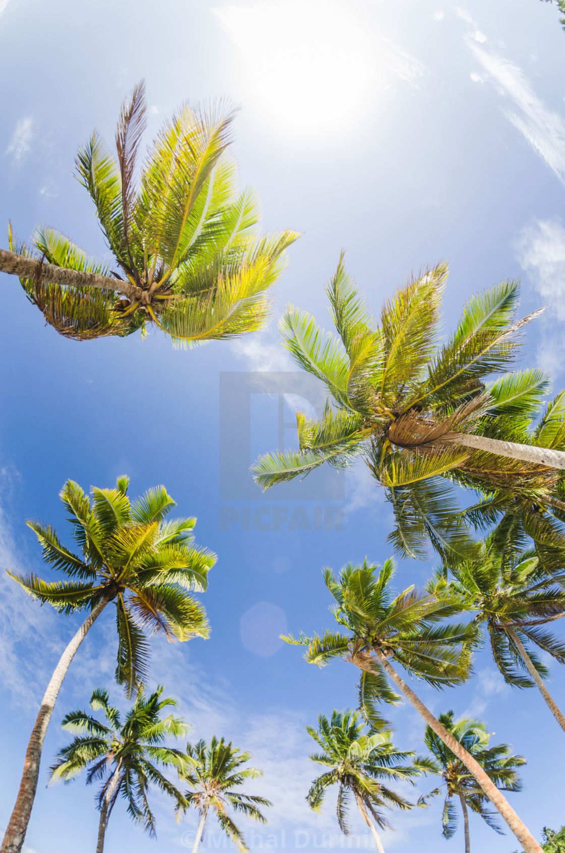 """coconut palm trees at the beach"" stock image"