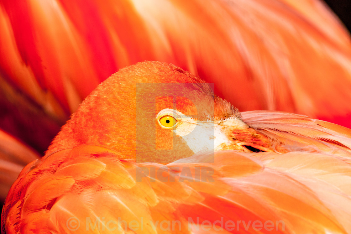 """Flamingo"" stock image"