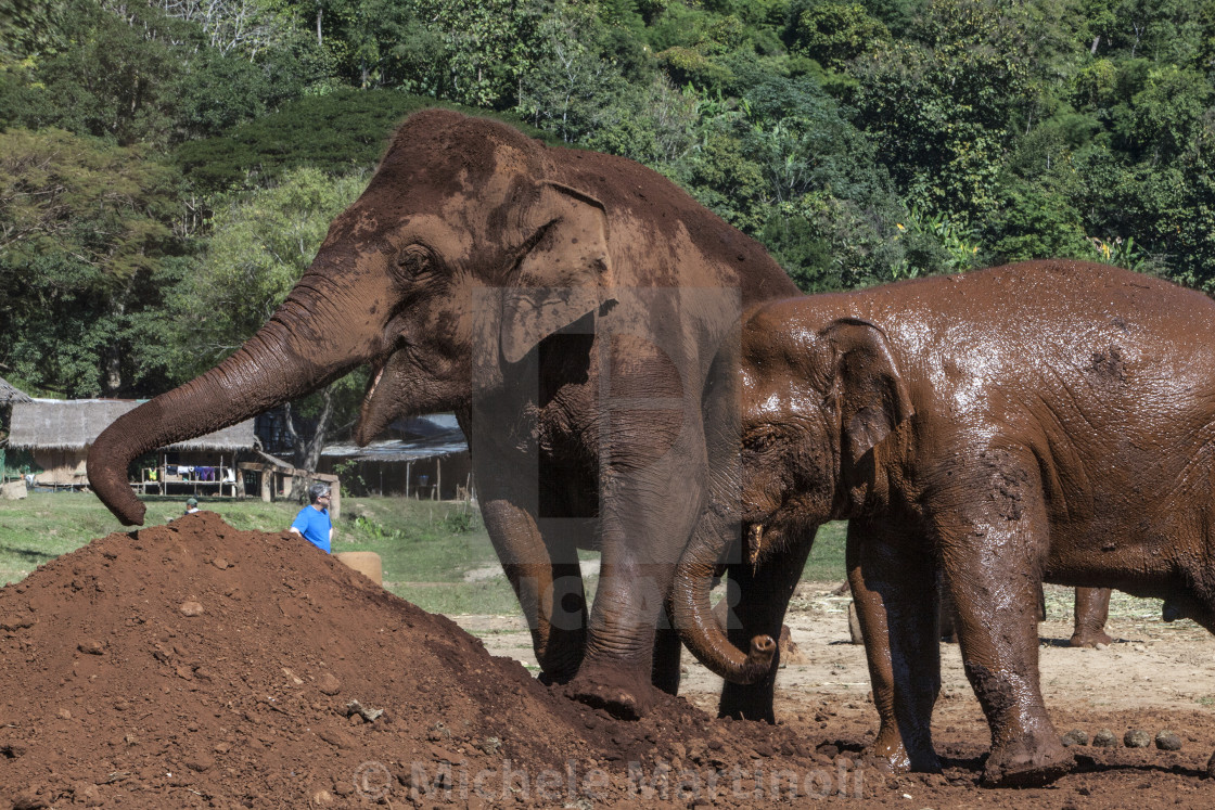 """Mother and calf elephants"" stock image"