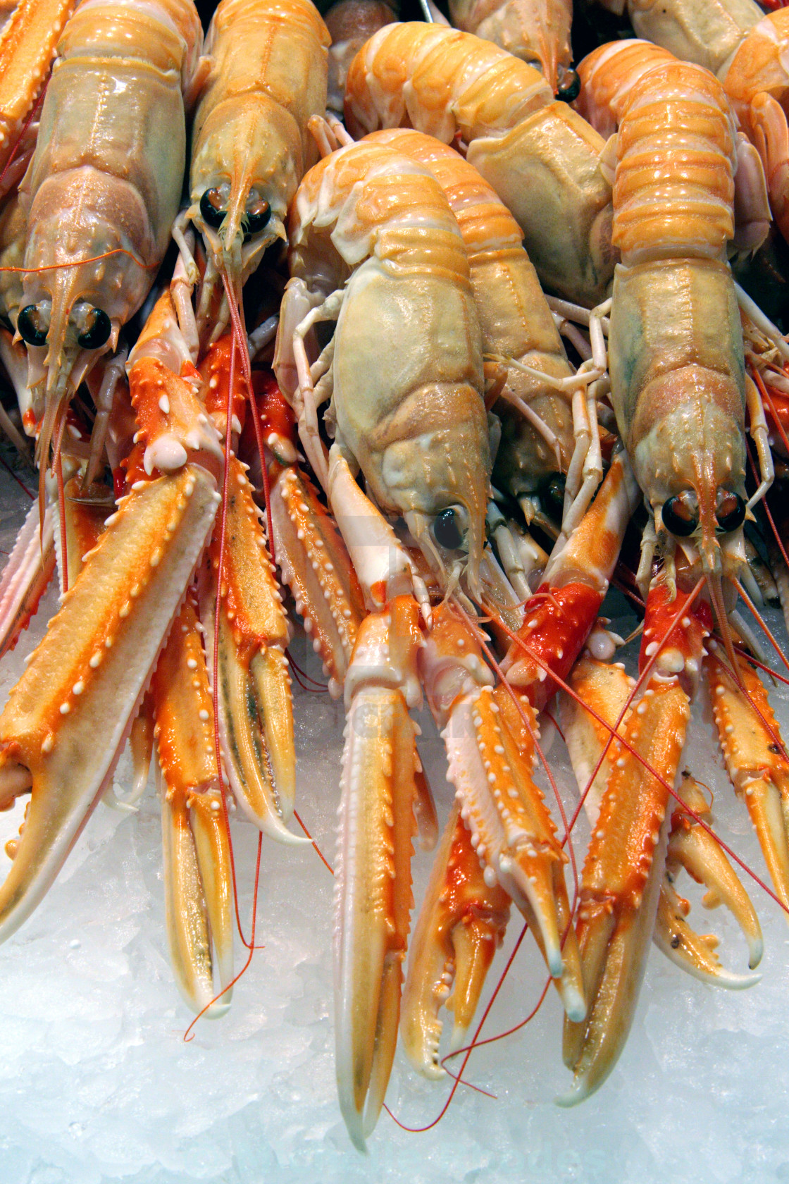 """Crustaceans on Ice"" stock image"