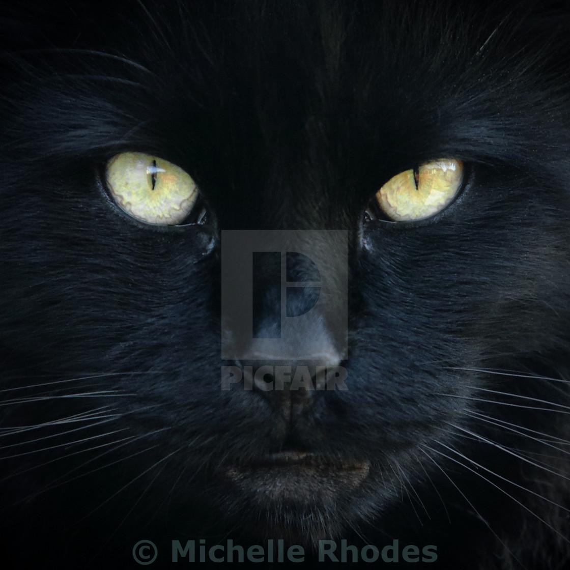 """Cat's Eyes"" stock image"
