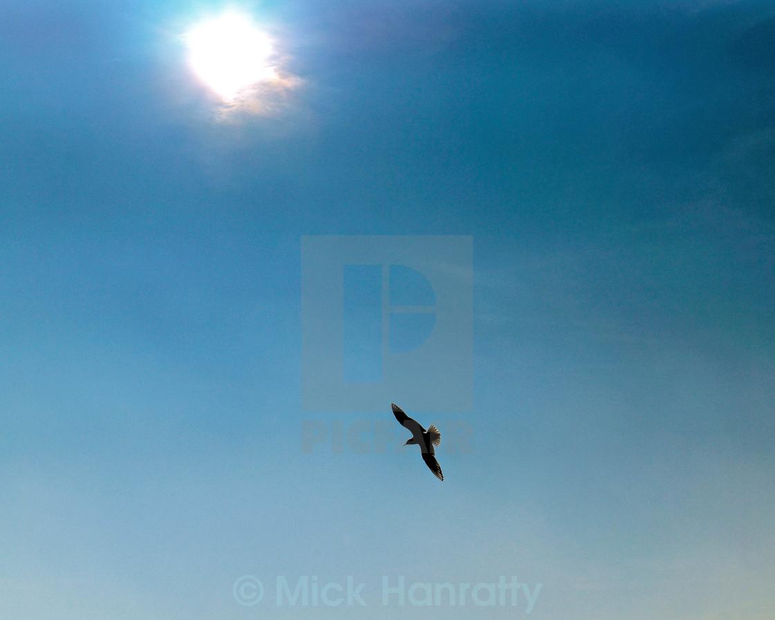 """Free as a Bird"" stock image"