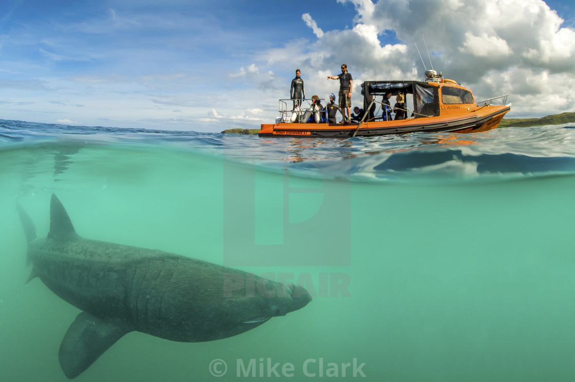 """Basking Shark Encounter"" stock image"