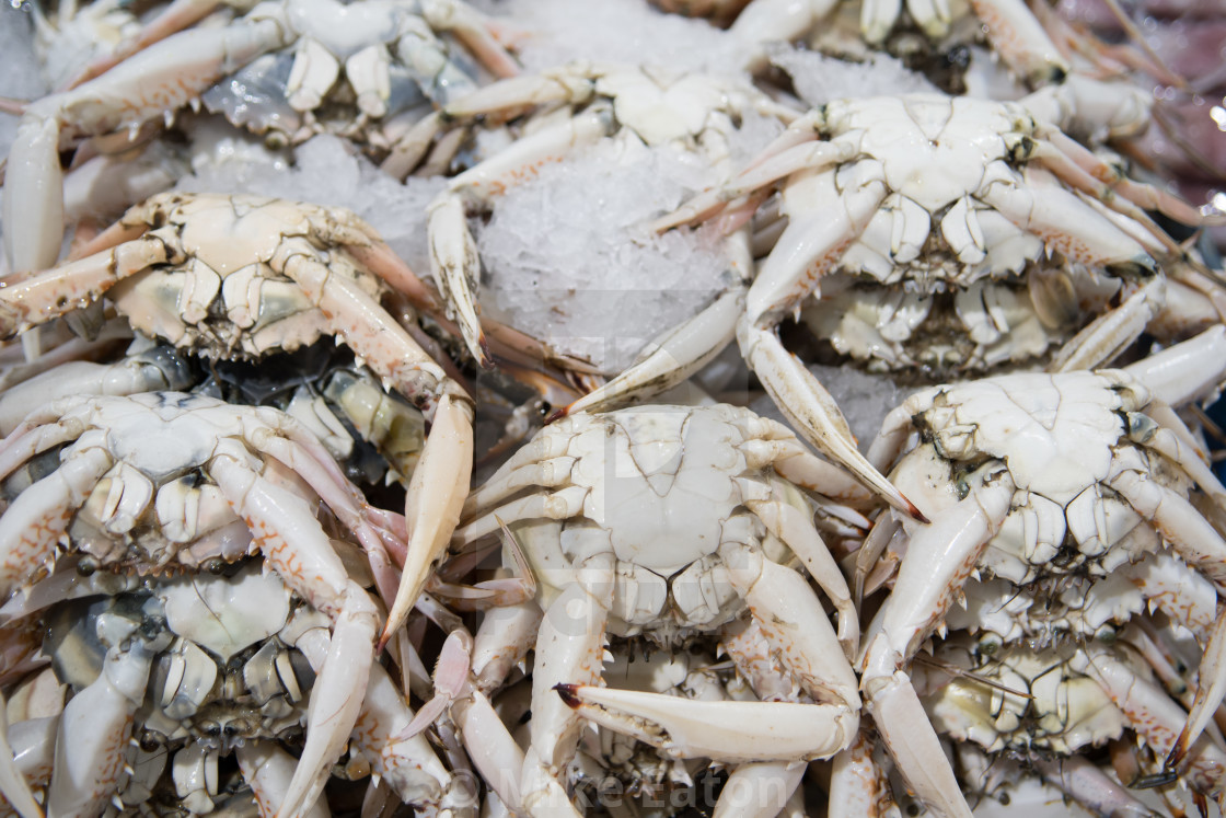 Fresh crab for sale at the modern fish market located in