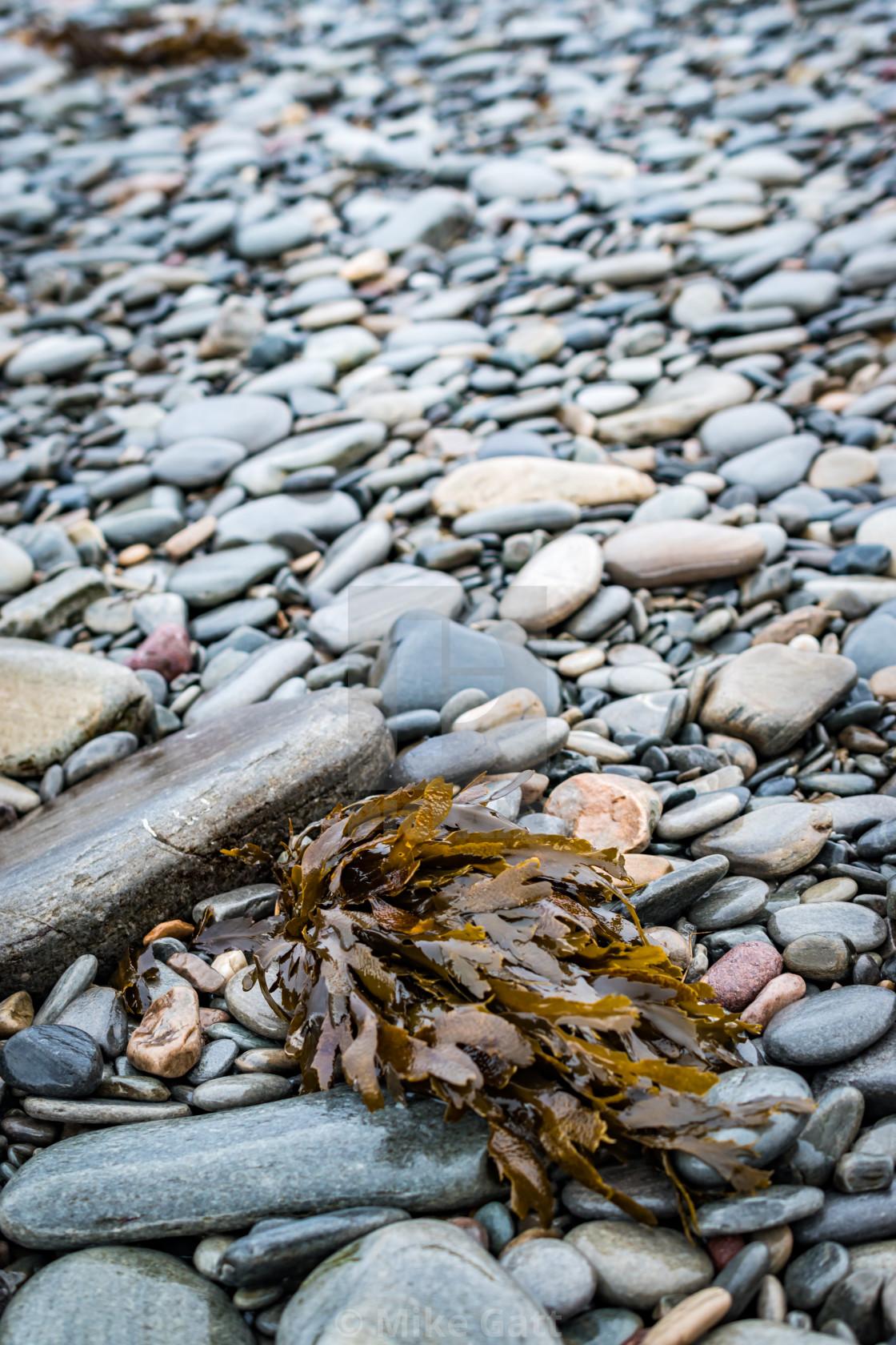"""Pebbles and seaweed"" stock image"