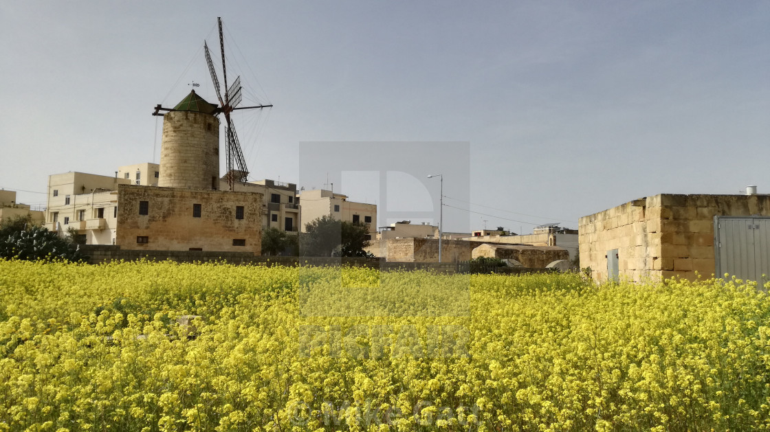"""""""Windmill and yellow flowers"""" stock image"""