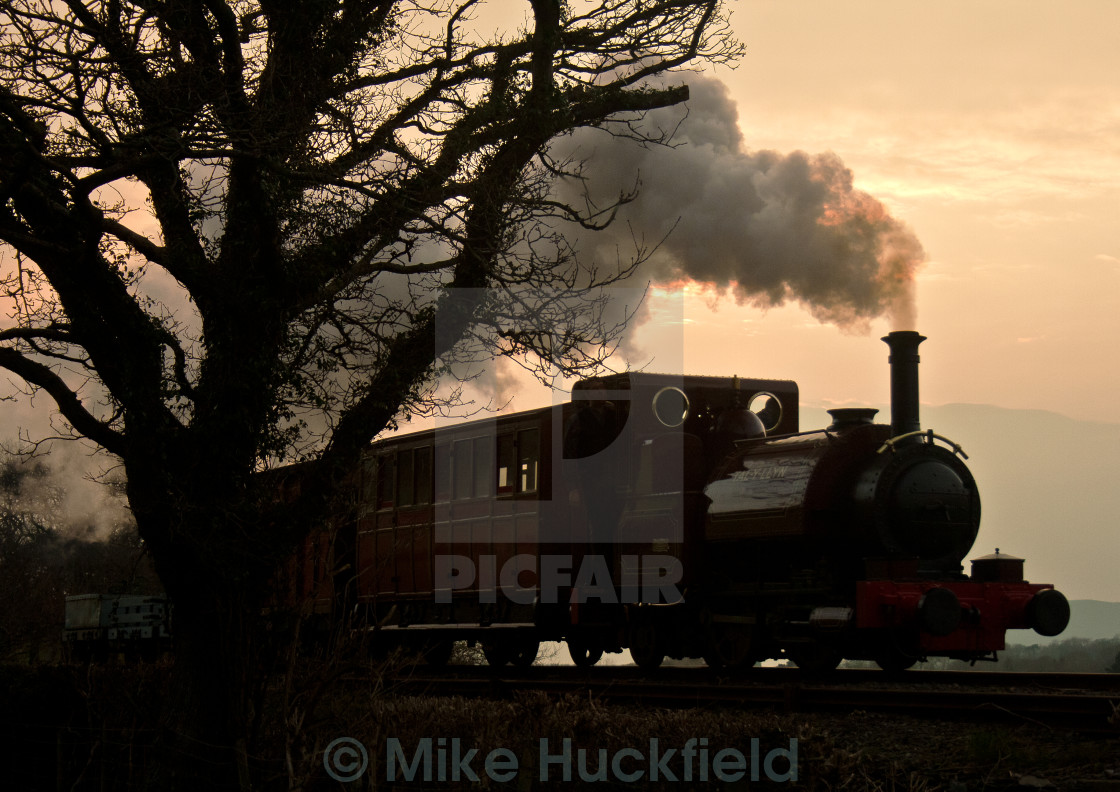 """""""'Talyllyn' And The Tree"""" stock image"""
