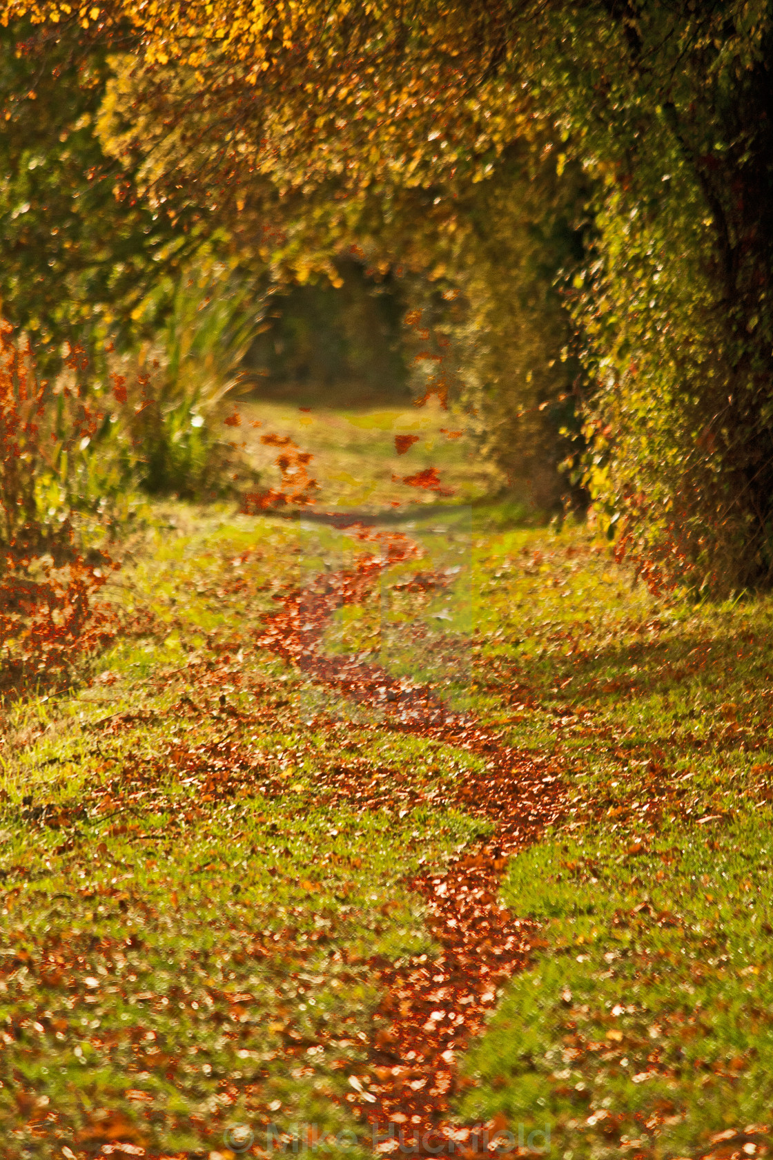 """The Path Through Autumn"" stock image"