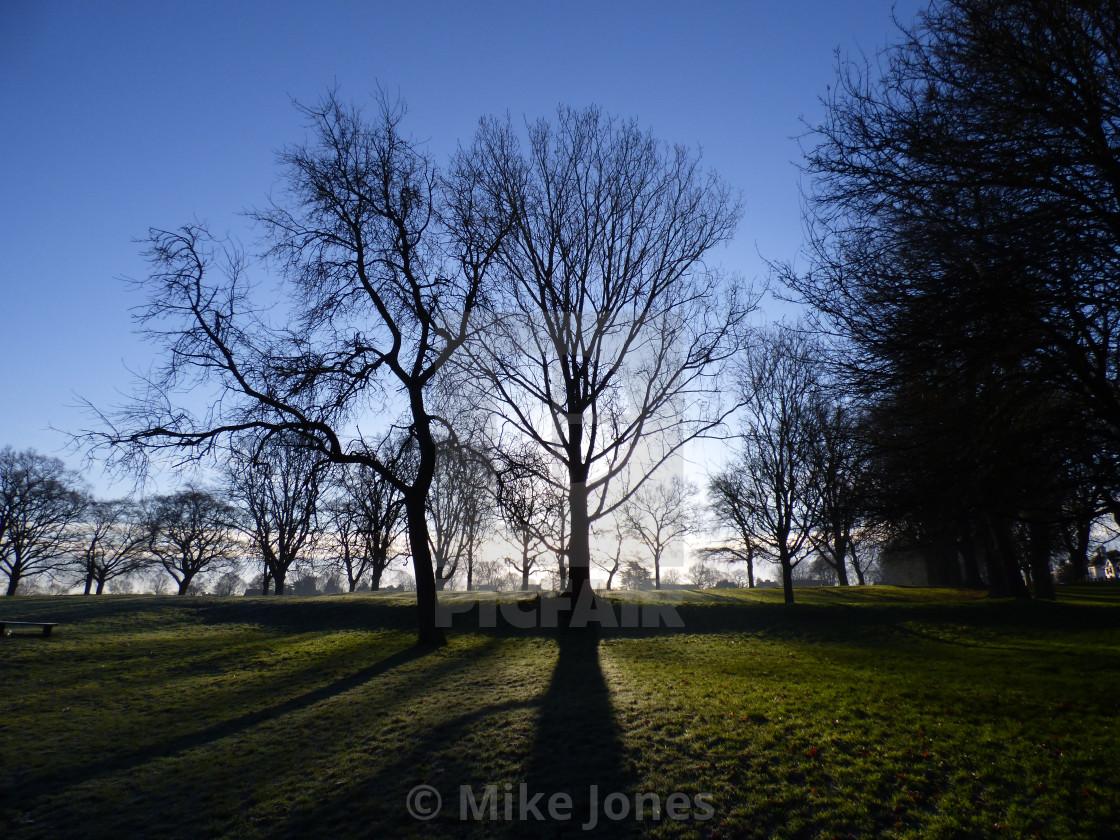 """Silhouette trees - blue sky"" stock image"