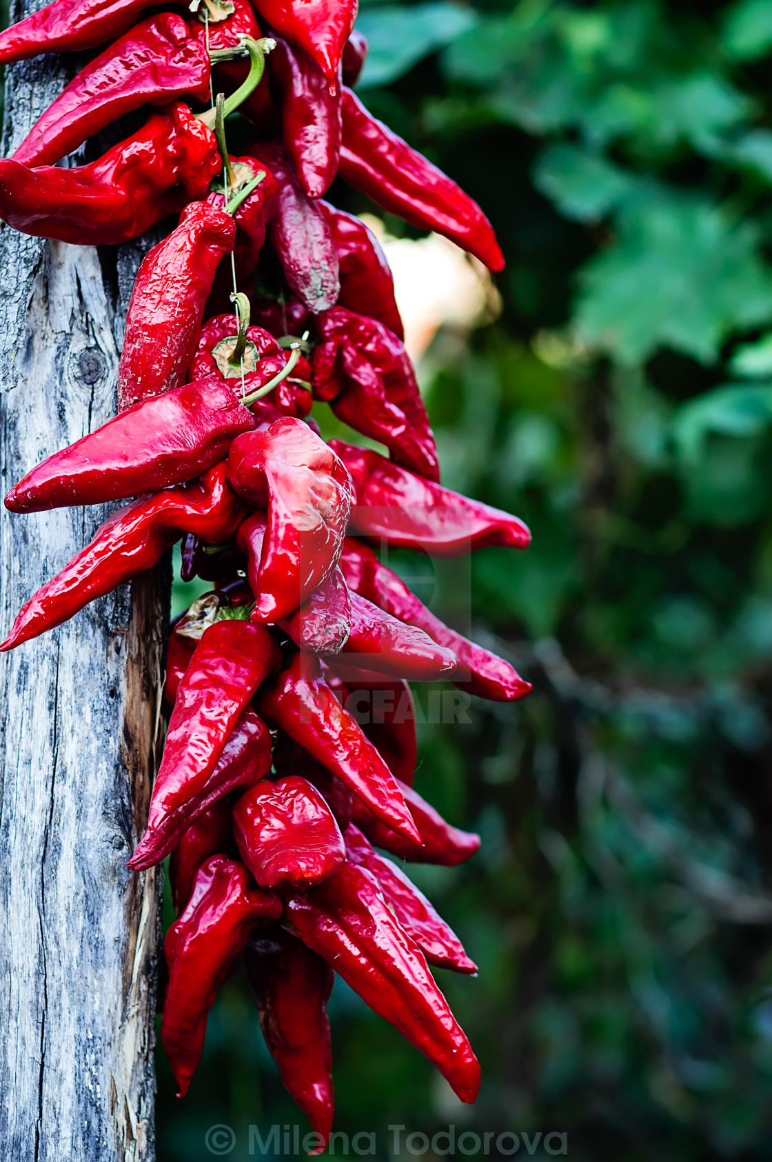 """""""Red peppers"""" stock image"""